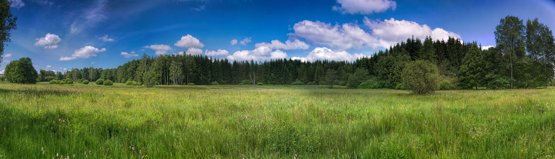 Sommer in der Scheibenberger Heide.